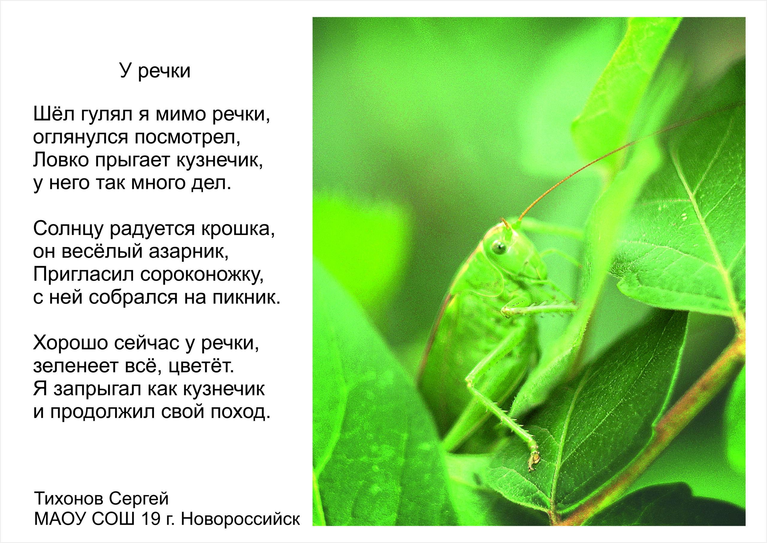 Тихонов Сергей. Фото кузнечика и стих
